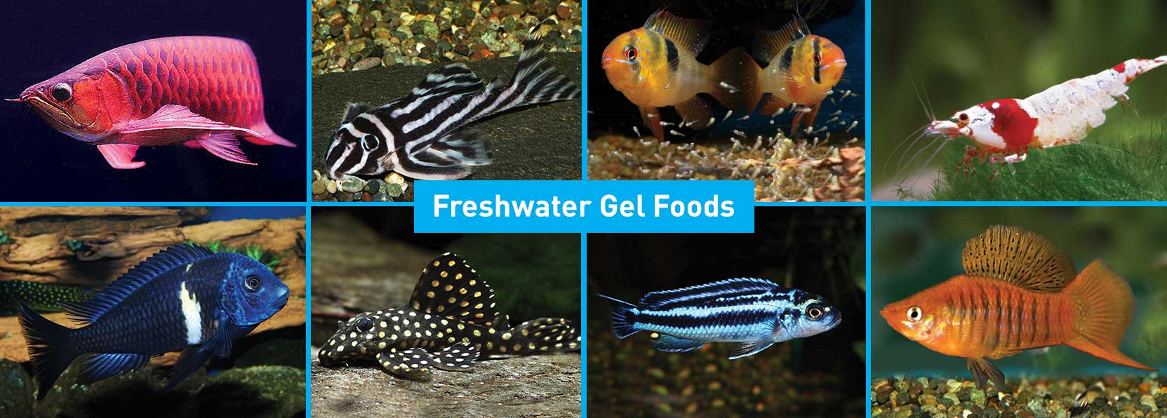 Fish-Products-banner-3
