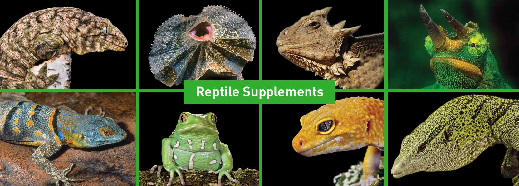 Reptile-Supplements-Products-banner