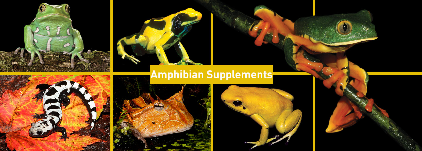 Amphibian-Products-banner