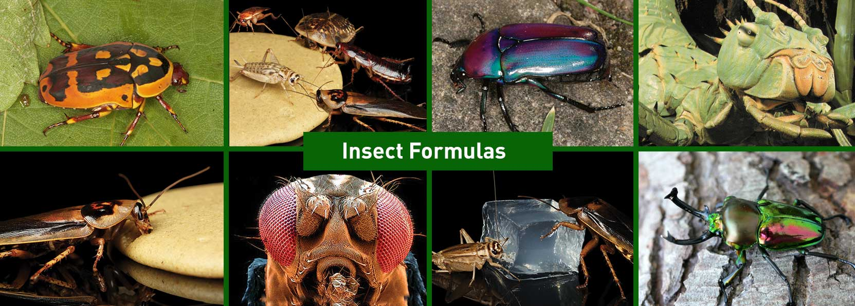 Insect-Products-banner